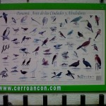 birds Ancon Hill