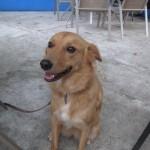 Lola Casco Viejo