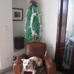 Cascp Viejo eco christmas tree