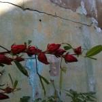 Saril plant 2