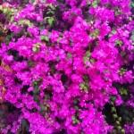 pink presence