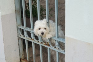 Diplomat dog