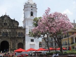 catedral en flor