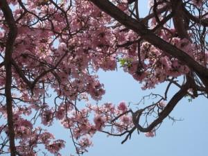 primavera casco