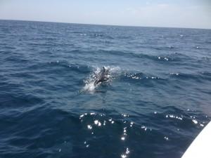 Casco Charters dolphin1