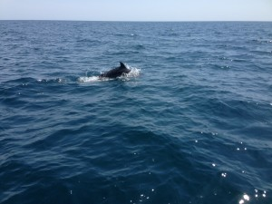 Casco Charters whales