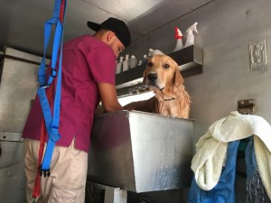 DogLife in Casco