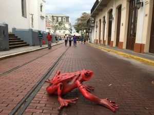 the frog casco viejo - copia