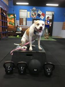 Gym in Casco